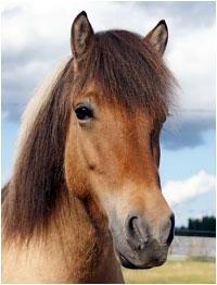 hevoset